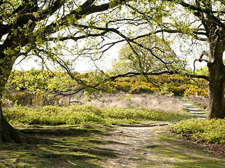 Heerlijke natuur midden op de Veluwe